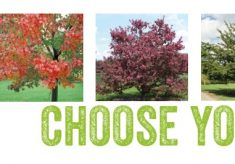 Update: we now have funds for all our sponsored trees!