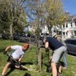 New Trees update: April 2021